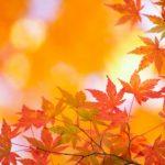 Herbst_rote_Blaetter_Herbstpauschalen