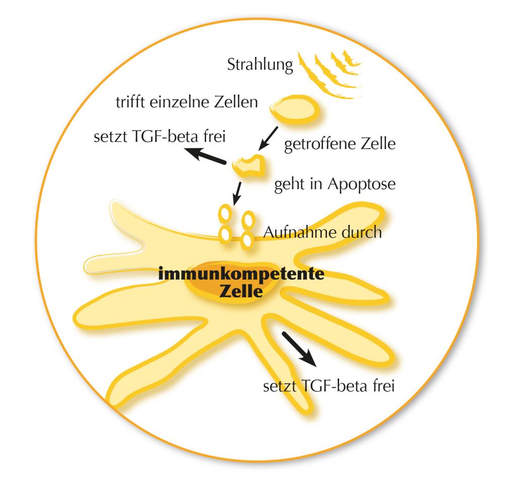 Grafik Wirkungsweise_Zelle im Detail